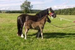 Westwick_Patience_&_Foal